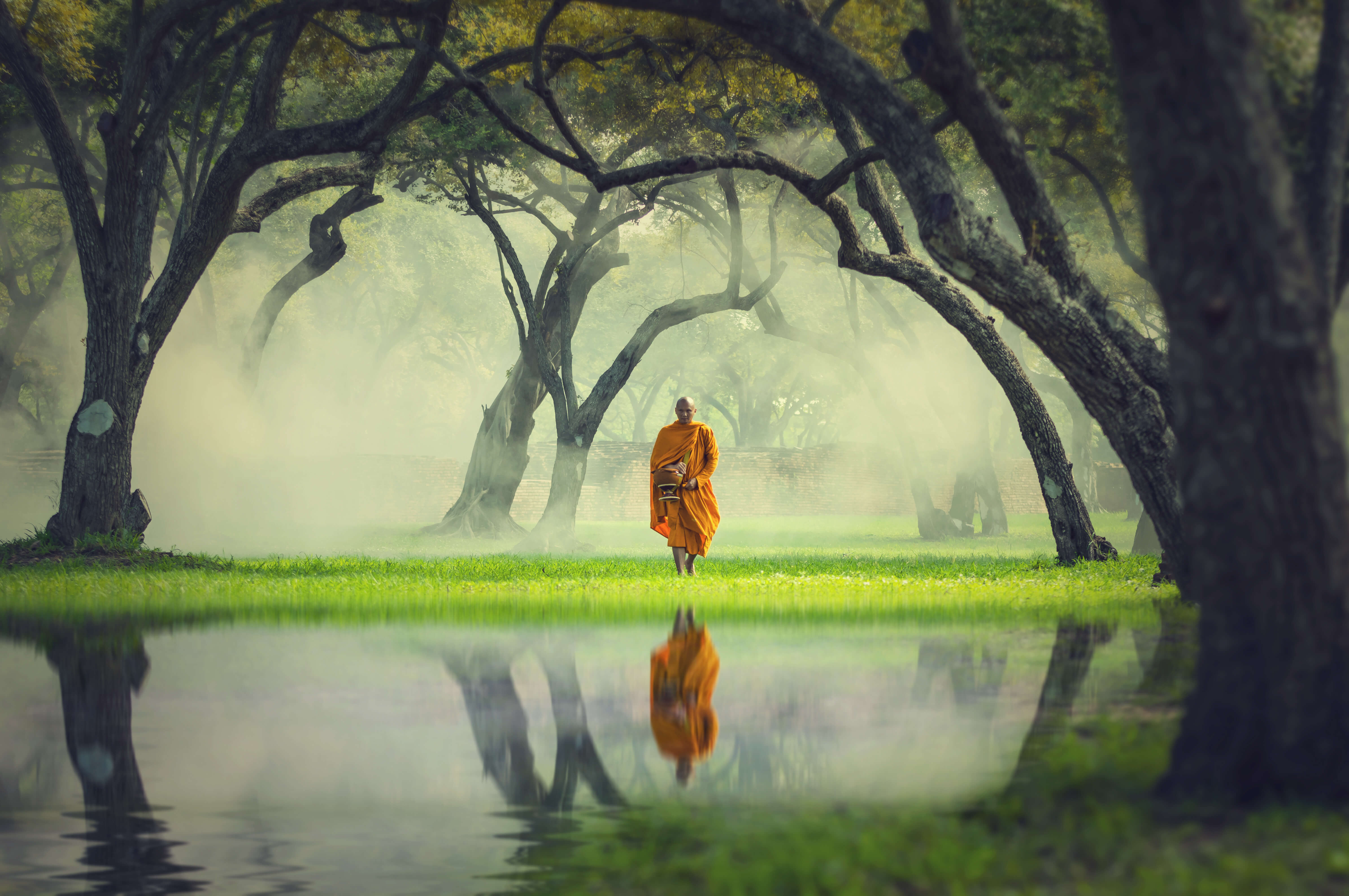 Monk in the Forest